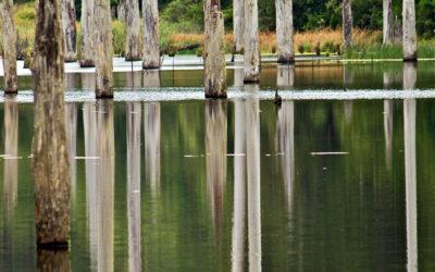 004 Otways reflections