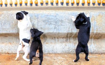 006 Puppies
