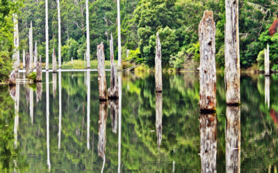 007 Otway forest reflections