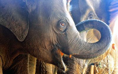 008 Elephants.