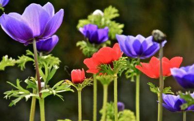 009 Flower forest