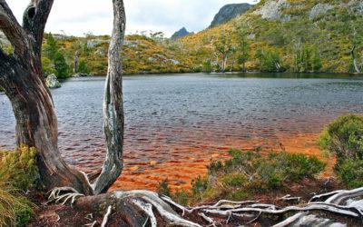 010 Tasmanian cairne