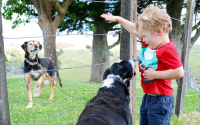 011 Boy with his dogs NZ