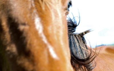 011 Horse