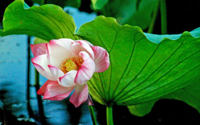 016 Lotus discovered