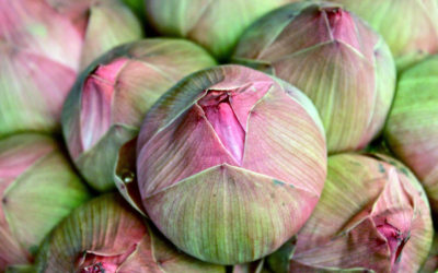 018 Lotus buds