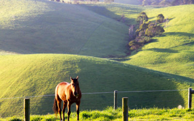 019 Grazing in Gippsland