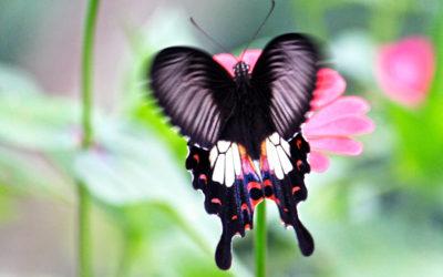 021 Butterfly