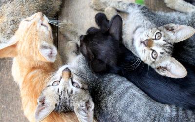 025 Kittens