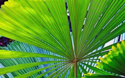 025 Palms detail
