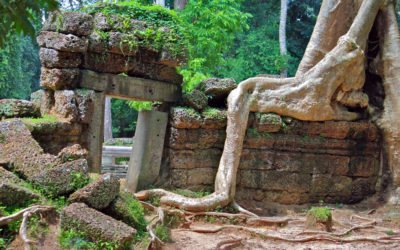 026 Fig trees & ancient ruins Cambodia