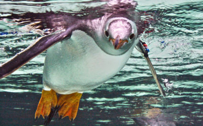 027 Penguin