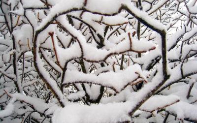 029 Snow focus