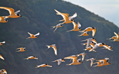 029 Flight of the terns