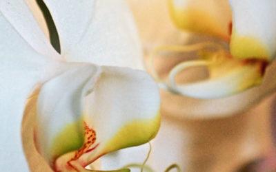 013 Orchid gossip