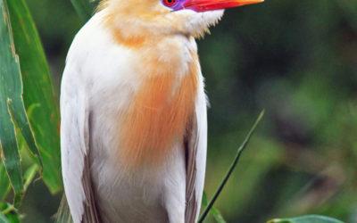 004 Heron