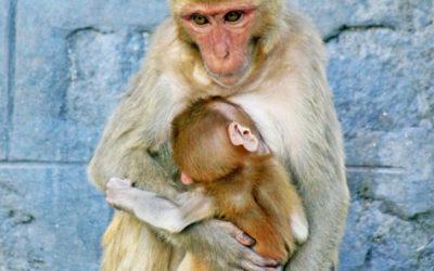 012 Monkey baby