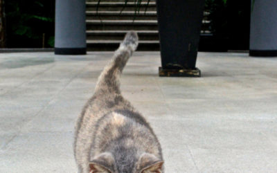 019 Architectural cat