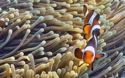 022 Nemo found