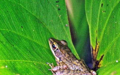 024 Tiny frog