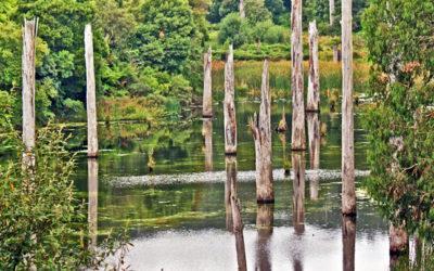 005 Lake Elizabeth Australia