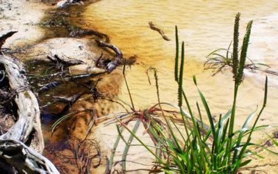 007 Australian coastal stream