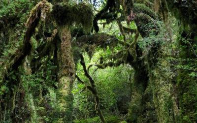 025 Jurassic corridor NZ