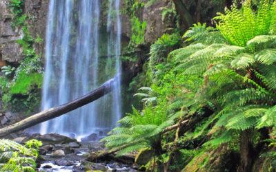 030 Otway waterfall